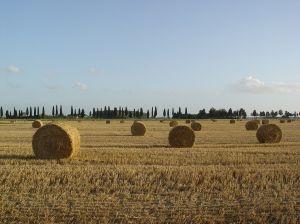 Estate in Toscana: tra mare, campagna e montagna